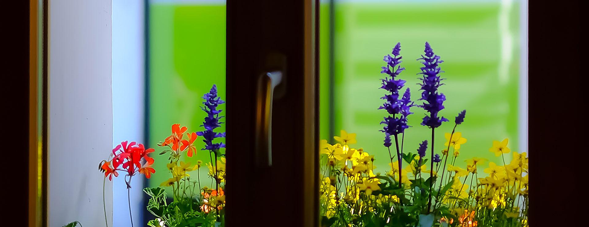 Fensterblumen